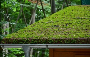 a roof covered with green