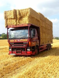 Hay barley and wheat straw