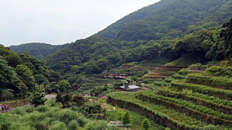台北北投 陽明山竹子湖,健走 享受群山環繞綠樹擁抱的美好