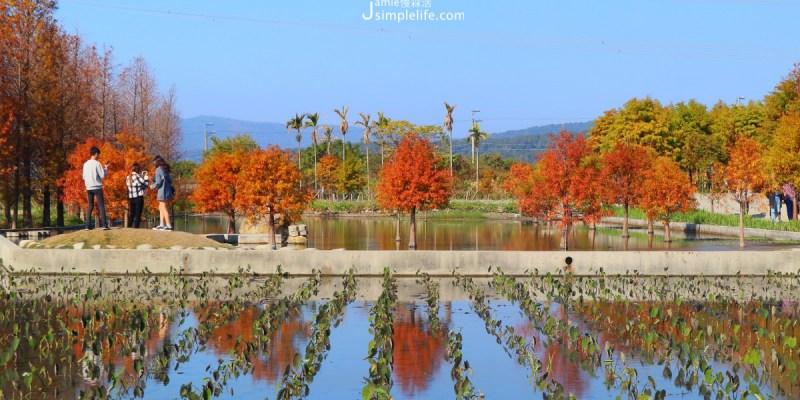 台中后里|泰安落羽松秘境,享自然!療癒在紅橙堆疊的唯美場域