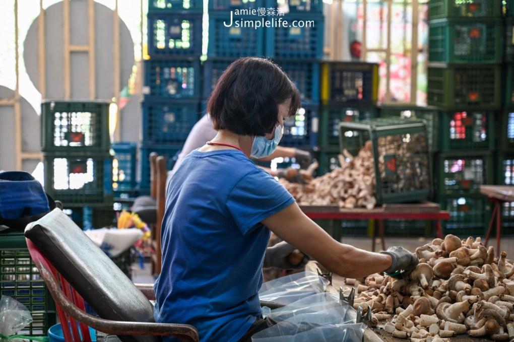世外桃源體驗「新社百菇莊」食農育樂 大姐正俐落修剪香菇
