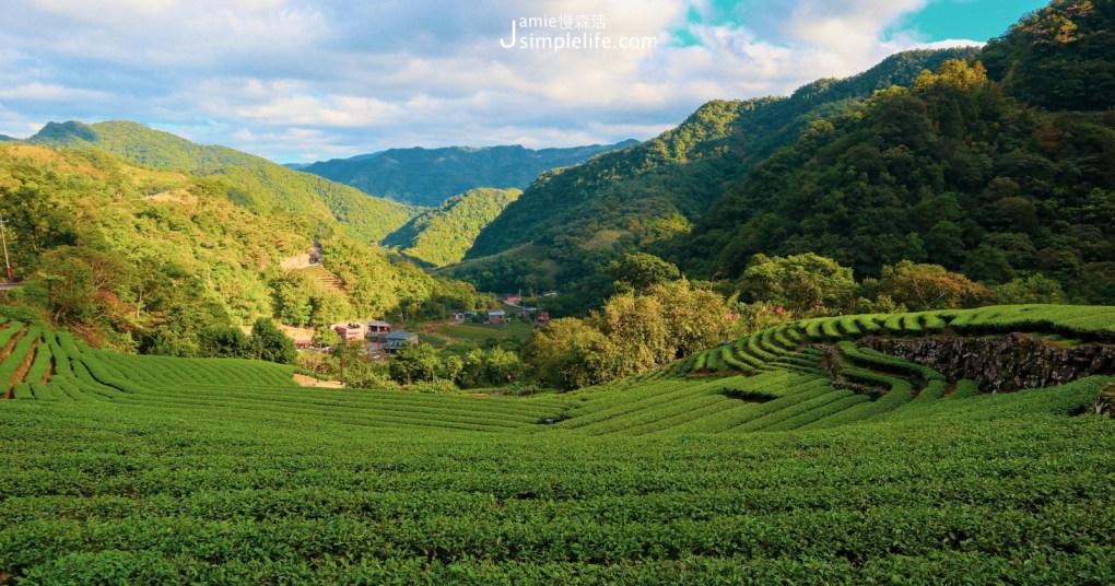 新北品茶健行!坪林茶園、南山寺,百年茶湯在仙境的回韻