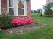 Prior to clean up and mulching