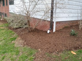 After Clean Up and Mulching in Rockville Maryland