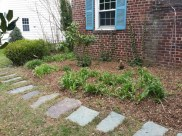 After Clean Up and Mulching in Silver Spring