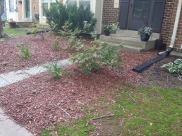 Before Debris Clean Up, Hedge Trimming, Weeding, Mulching, by JSV Lawn Care Service, JSV Lawns, JSV Lawns of MD. Lawn Care, Landscaping, Clean Up, Montgomery Village, Montgomery County, Maryland