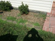 Before Weeding and Clean Up by JSV Lawn Care Service, JSV Lawns, JSV Lawns of MD. Lawn Care, Landscaping, Clean Up, Weeding, Weed Pulling, Montgomery County, Maryland,Gaithersburg