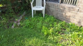 Before Weeding and Clean Up by JSV Lawn Care Service, JSV Lawns, JSV Lawns of MD. Lawn Care, Landscaping, Clean Up, Weeding, Weed Pulling, Montgomery County, Maryland, Montgomery Village