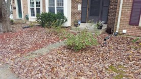 Before Leaf Removal, Clean Up by JSV Lawn Care Service, JSV Lawns, JSV Lawns of MD. Lawn Care, Landscaping, Clean Up, Montgomery Village, Montgomery County, Maryland