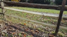 After Fence Repair by JSV Lawn Care Service, JSV Lawns, JSV Lawns of MD. Lawn Care, Landscaping, Montgomery Village, Montgomery County, Maryland