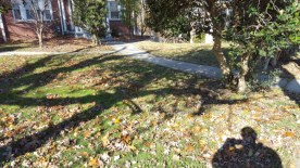 Before Leaf Removal, Clean Up by JSV Lawn Care Service, JSV Lawns, JSV Lawns of MD. Lawn Care, Landscaping, Clean Up, Takoma Park, Montgomery County, Maryland