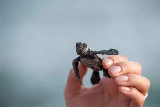 person with funny wild turtle in hand