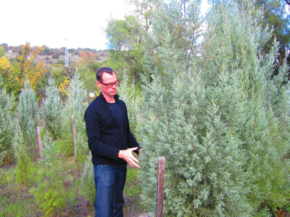 Hunting For The Perfect JNF Christmas Tree In Israel