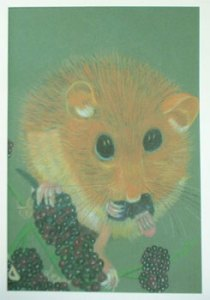 Dormouse on blackberries - Ref 203