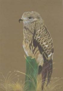 Bird of Prey - Ref 210