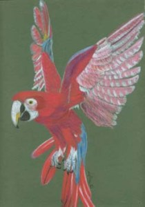 Parrot Artwork Card - Ref 211