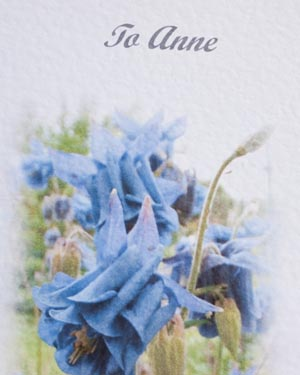 Aquilegia - Birthday Card Closeup - Ref P174