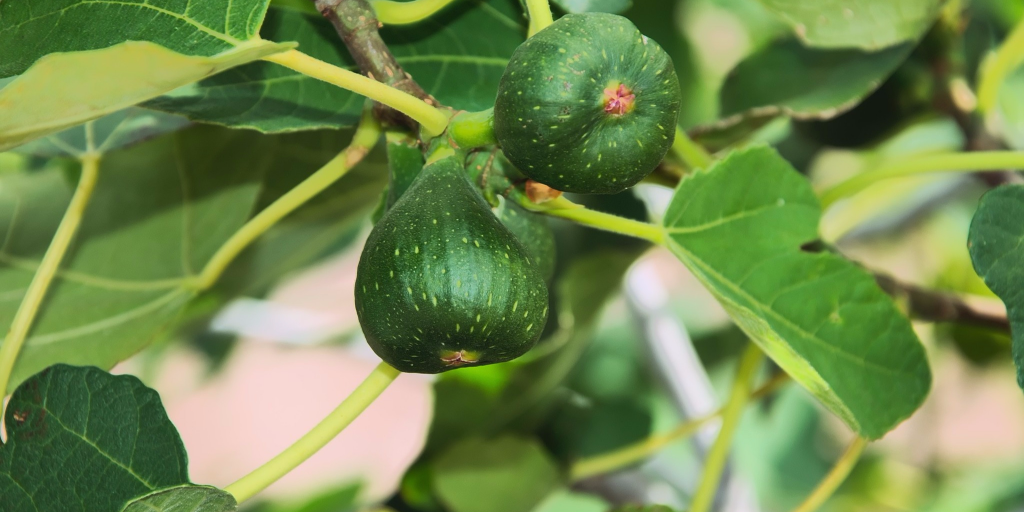 What fruit is on your tree?