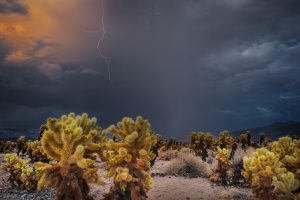 Desert Monsoon by T.M. Schultze, taken during monsoon season in Joshua Tree National Park