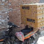 Ayam Hias Pesanan Bapak Wahyu di Pelalawan Riau