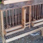 Membuat kandang yang Tepat Agar Ayam Serama merasa Nyaman