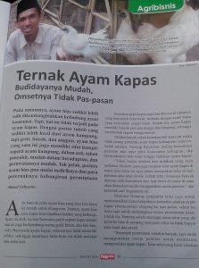 Ternak Ayam Kapas jualaayamhias.com Terbit di Malajalah Pengusaha Indonesia