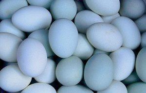 Telur Bebek untuk si Tetaskan