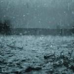 Beberapa Hal yang Dapat Terjadi pada Ayam Jawa Super (JOPER) Saat Musim Hujan