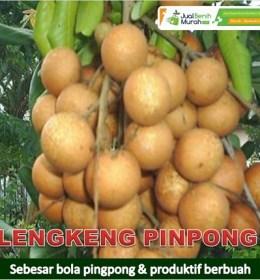 Lengkeng Pingpong