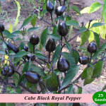 Benih Cabe Black Royal (Maica Leaf)