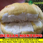 Bibit Durian Montong Super