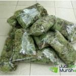 Media Tanam Lumut Hidup / Forest Moss