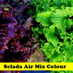 Benih Selada Air Mix Color (Maica Leaf)