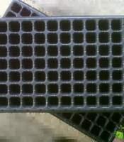 Tray Semai 98 Lubang