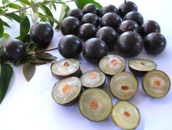 buah-anggur-brazil
