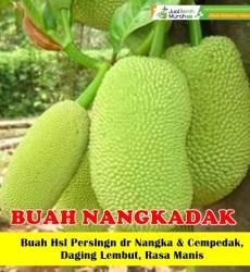 buah-nangkadak