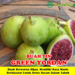 Bibit Buah Tin Green Yordan 50 cm