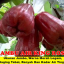 Buah Jambu King Rose