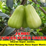 Buah Taiwan Super Green