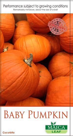 Benih Baby Pumpkin Maica Leaf