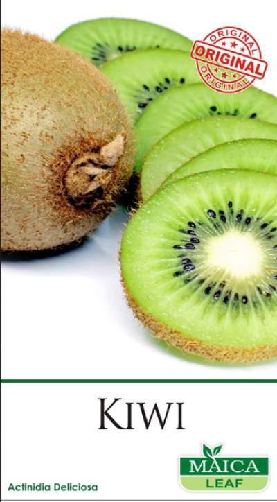 Benih Kiwi maica leaf 1