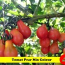 Benih Tomat Pear Mix Colour