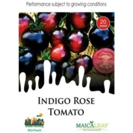 Benih Tomat indigo Rose