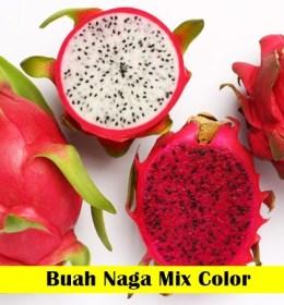 Buah Naga Maica leaf