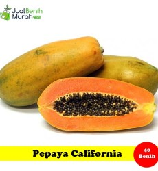 Pepaya California Maica Leaf