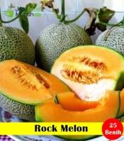 Rock Melon Maica Leaf