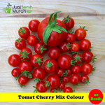 Benih Tomat Cherry Mix Colour (Maica Leaf)