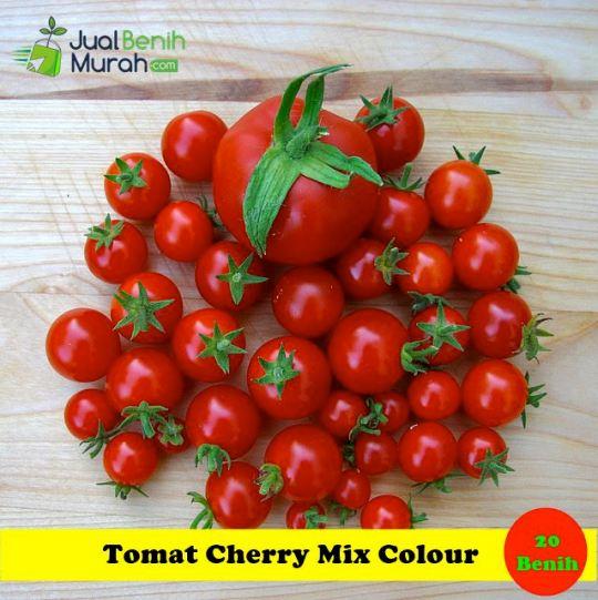 Tomat Cherry Maica Leaf