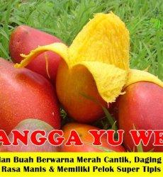 Mangga Yu wen