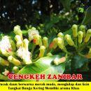 Cengkeh Zanibar